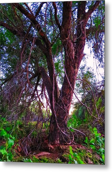 Metal Print featuring the photograph Mesquite By The Wash by Judy Kennedy