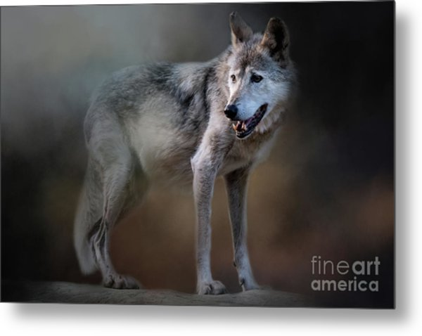 Mexican Wolf Metal Print