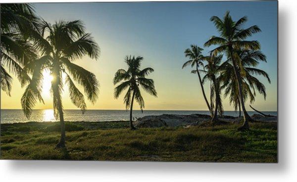 Mexico Palm Tree Sunrise Metal Print