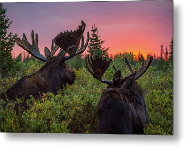 Mighty Giants Enjoy A Sunrise Breakfast Metal Print