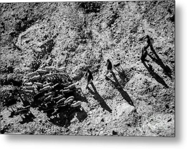 Metal Print featuring the photograph Migration by Awais Yaqub