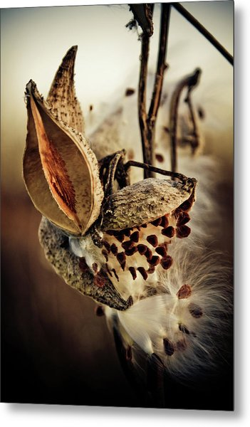 Metal Print featuring the photograph Milk Pod In Magic Light 5 by Tatiana Travelways