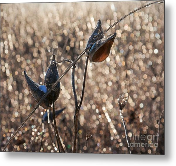 Metal Print featuring the photograph Milk Pods In A Field Of Sparkling Light by Tatiana Travelways