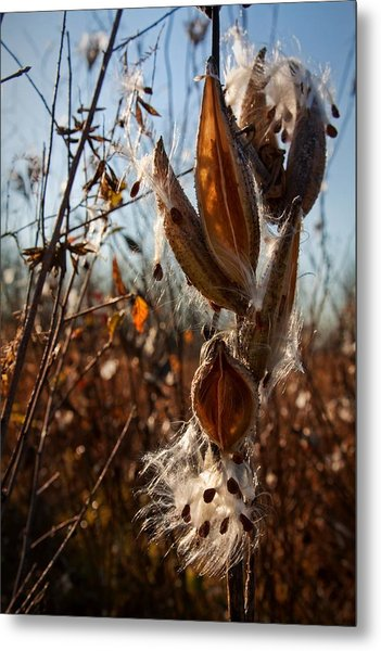 Metal Print featuring the photograph Milk Pods In Magic Light 2 by Tatiana Travelways