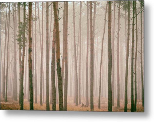 Misty Pines. Horytsya, 2018. Metal Print