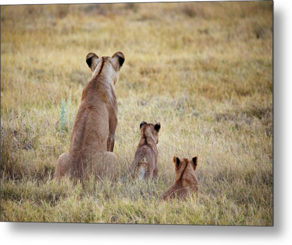 Mom And Cubs Metal Print