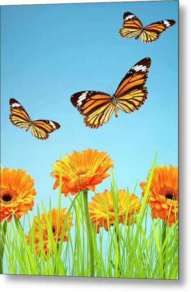 Monarch Butterflies With Grass And Metal Print by Chris Stein