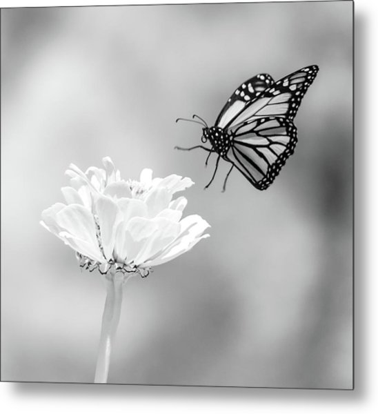 Monarch In Infrared 6 Metal Print