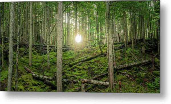 Monashee Forest Sunset Metal Print