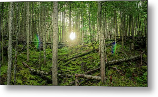 Monashee Forest Sunset With Flare Metal Print