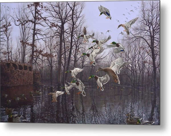Monday Morning Mallards Metal Print