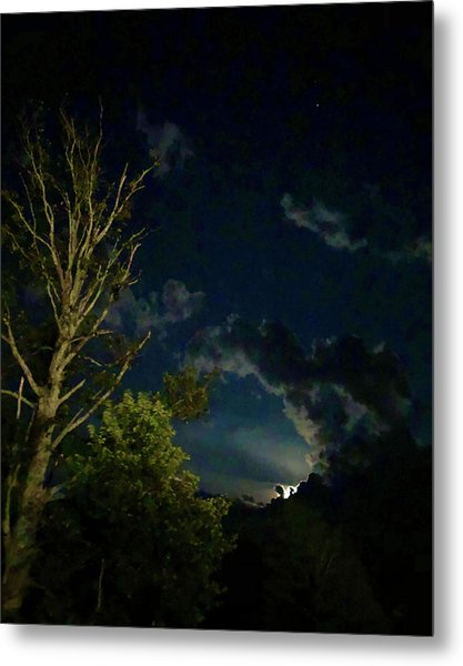 Moonlight In The Trees Metal Print