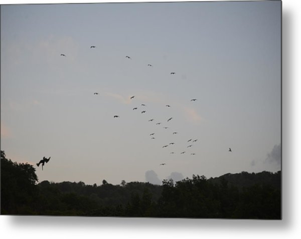 Morning Flock Rise Metal Print