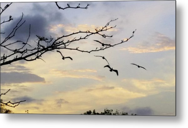 Morning Sky View Metal Print