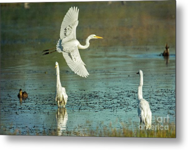 Metal Print featuring the photograph Morning Gold by Craig Leaper