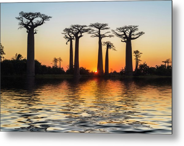 Morondava, Baobab Alley Metal Print by Gabrielle Therin-weise