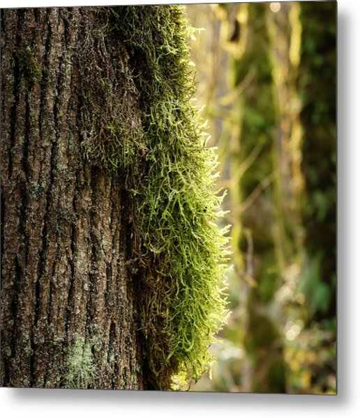 Moss On Bark Metal Print