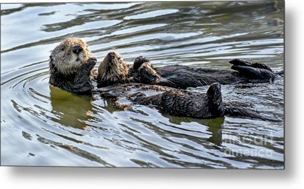 Mother Sea Otter Relaxing With Baby Metal Print