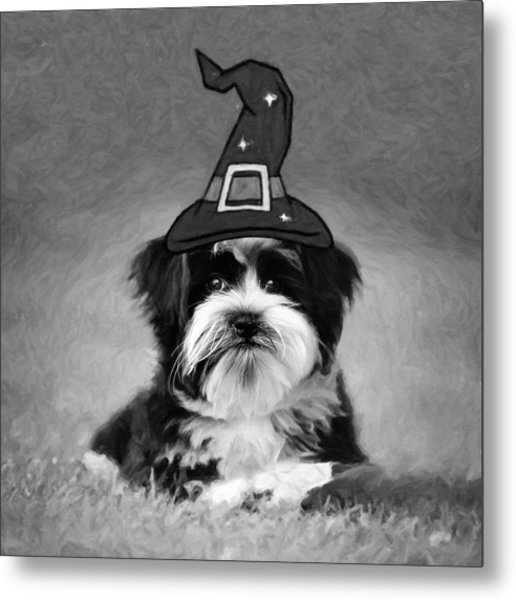 Metal Print featuring the photograph Mr. Wizard by Sue Collura