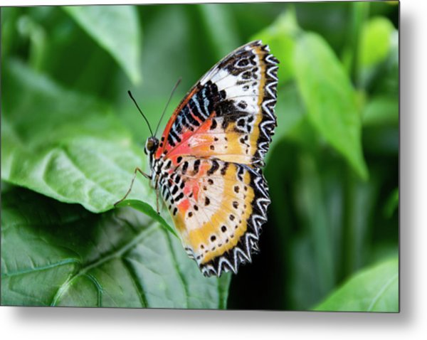 Multi Colored Butterfly Metal Print