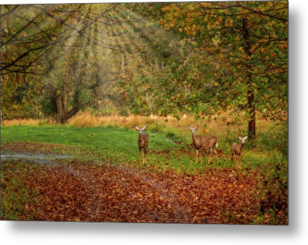 Metal Print featuring the photograph My Deer Family by Susan Candelario