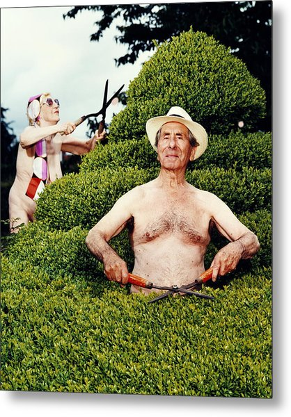 Naked Mature Couple Trimming Hedge, Man Metal Print by Chris Craymer