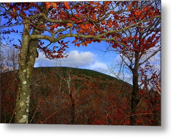 Metal Print featuring the photograph Nature Frames Mount Greylock's Tower by Raymond Salani III