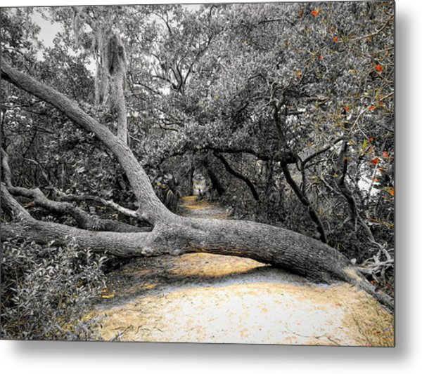 Nature's Way Metal Print