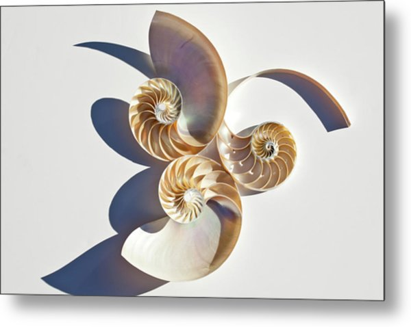 Nautilus 0425 Metal Print