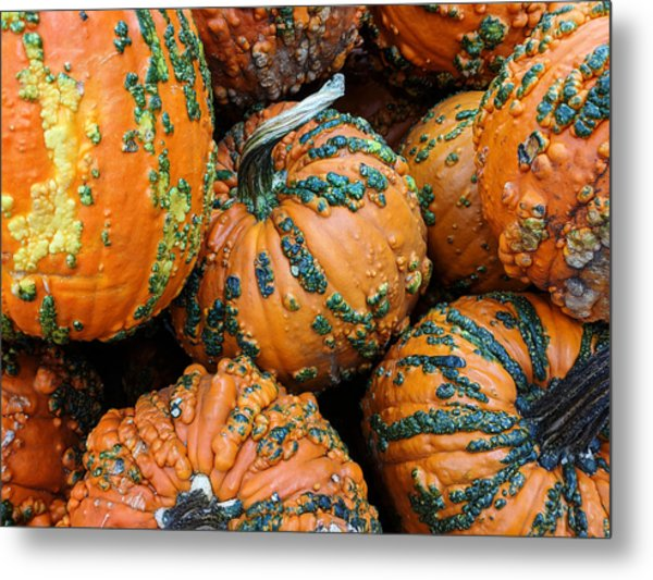 Nestled - Autumn Pumpkins Metal Print