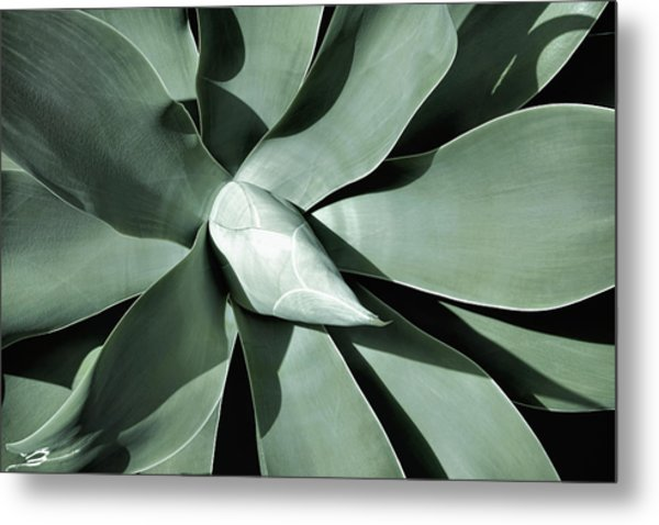 Metal Print featuring the photograph New Growth I by Leda Robertson