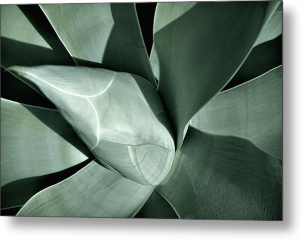 Metal Print featuring the photograph New Growth II by Leda Robertson