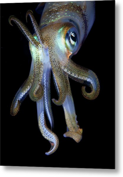 Night Observer Metal Print by Nature, Underwater And Art Photos. Www.narchuk.com
