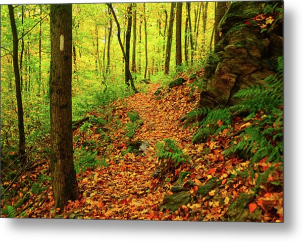 Metal Print featuring the photograph North Side Of Mount Greylock's At 2 by Raymond Salani III