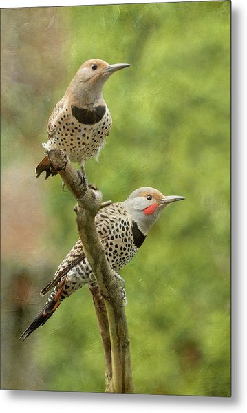 Northern Flicker Couple Metal Print