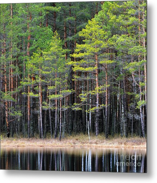 Northern Forest Landscape With A Lake Metal Print