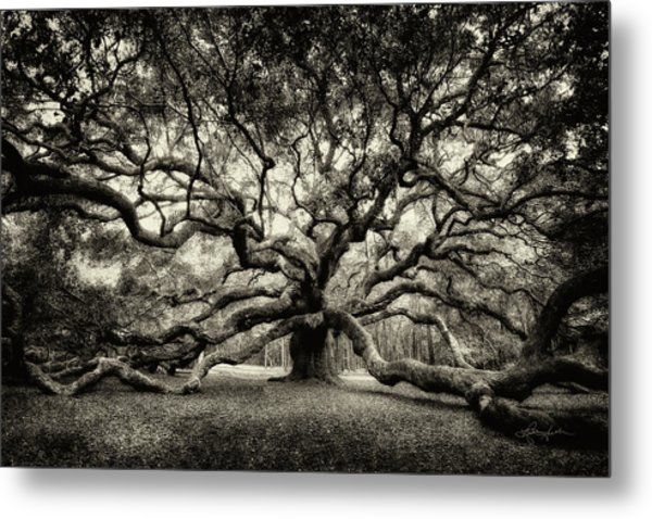 Oak Of The Angels - Sepia Metal Print