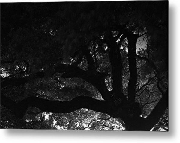 Oak Tree At Night Metal Print by Edward Swearingen