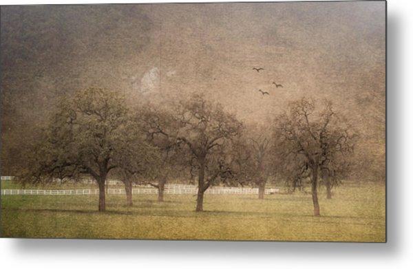 Oak Trees In Fog Metal Print