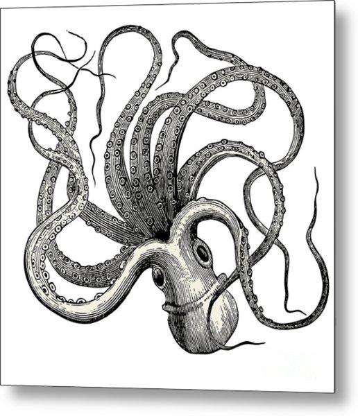 Octopus Octopus Vulgaris - Vintage Metal Print
