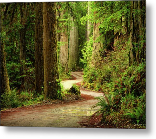 Old Growth Forest Route Photograph By Leland D Howard