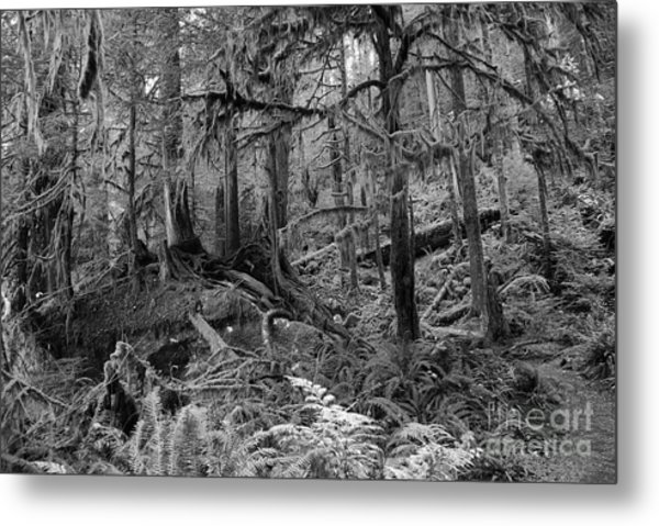 Olympic Rainforest Metal Print