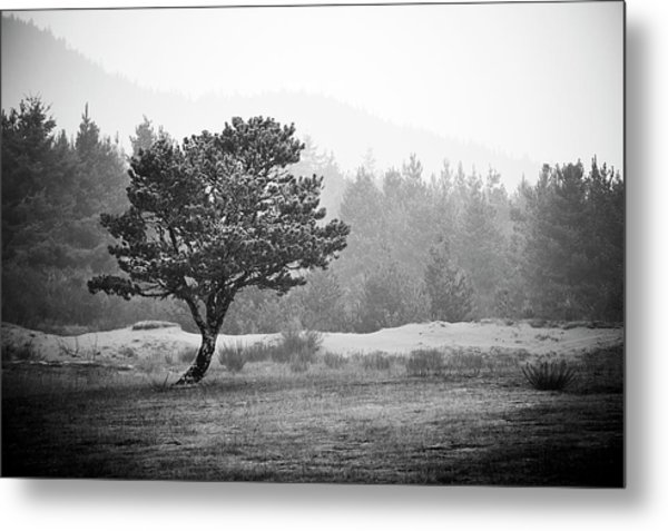 Metal Print featuring the photograph On My Own by Whitney Goodey