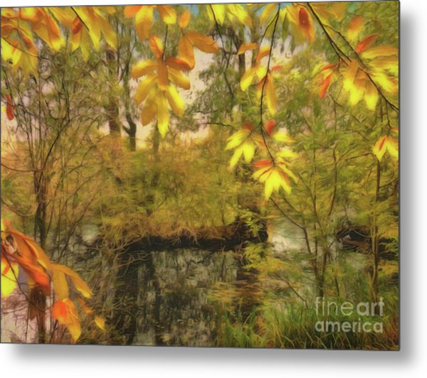 Metal Print featuring the photograph Once A Pond A Time by Leigh Kemp