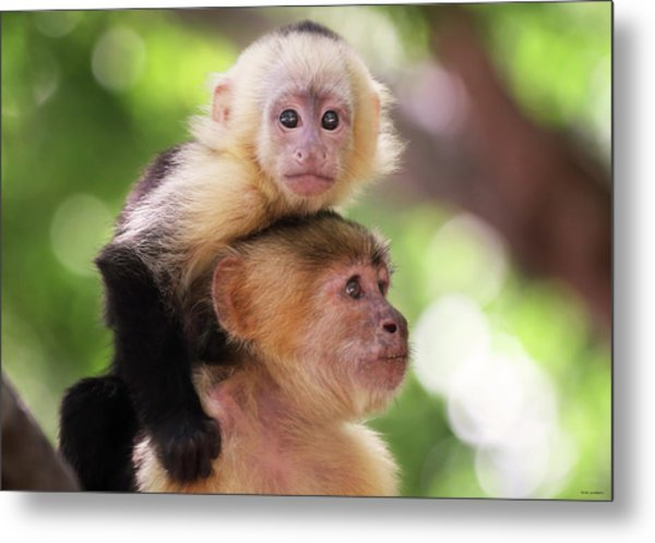 One Of Those Days When You Just Can't Seem To Get The Monkey Off Your Back Metal Print