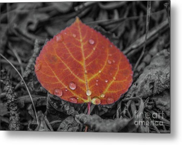 Orange Aspen Leaf Metal Print