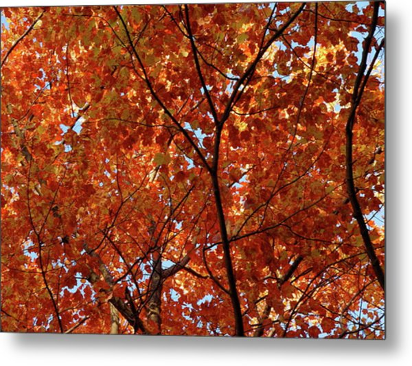 Orange Everywhere Metal Print