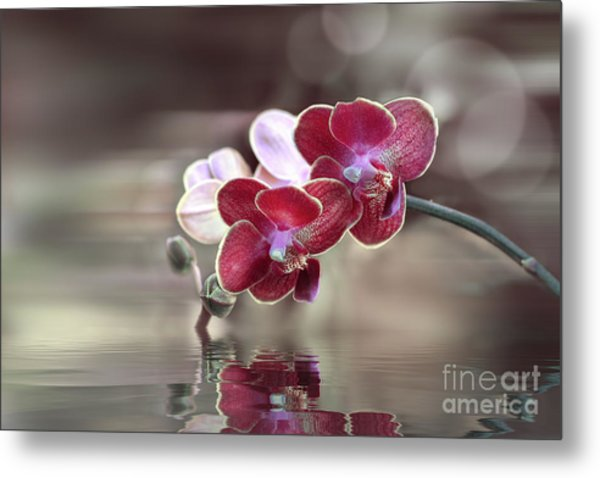 Orchid Reflection Metal Print