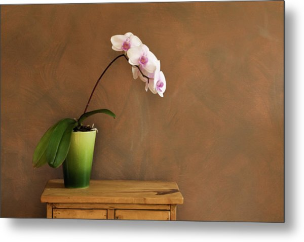 Orchid Still Life Hz Metal Print by Yinyang