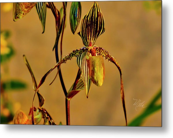 Orchid Study Eight Metal Print